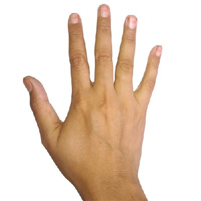 Hand Medium Skin Image